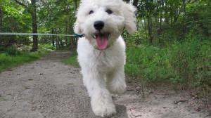 milwaukee dog walkers